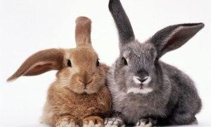 Bunny-rabbits-006
